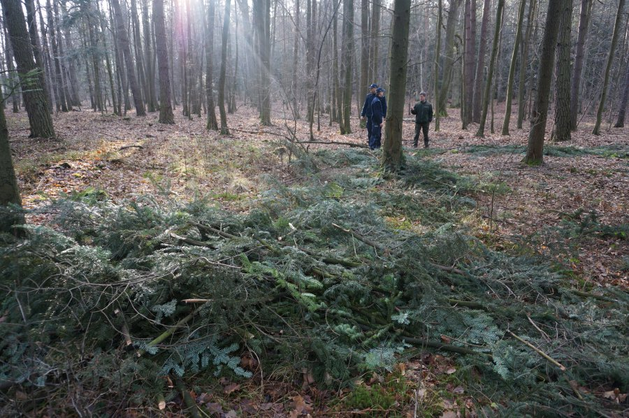 Kryminalni odnaleźli zaginionego grzybiarza